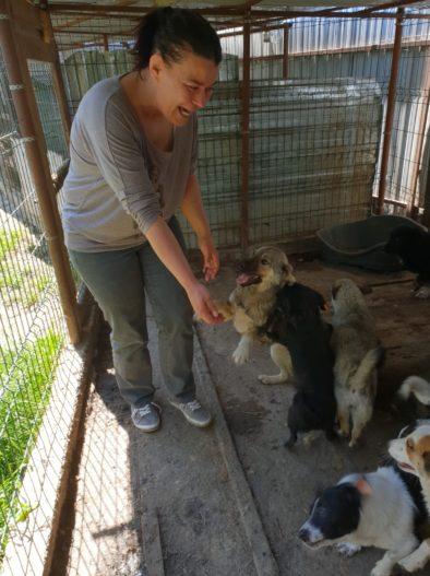 Hunde_rumänien_frau